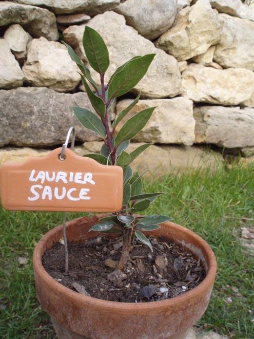 Laurier sauce